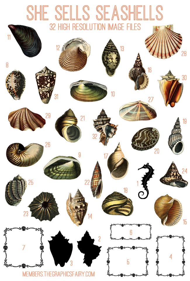 Gorgeous Seashells Image Kit Tgf Premium The Graphics
