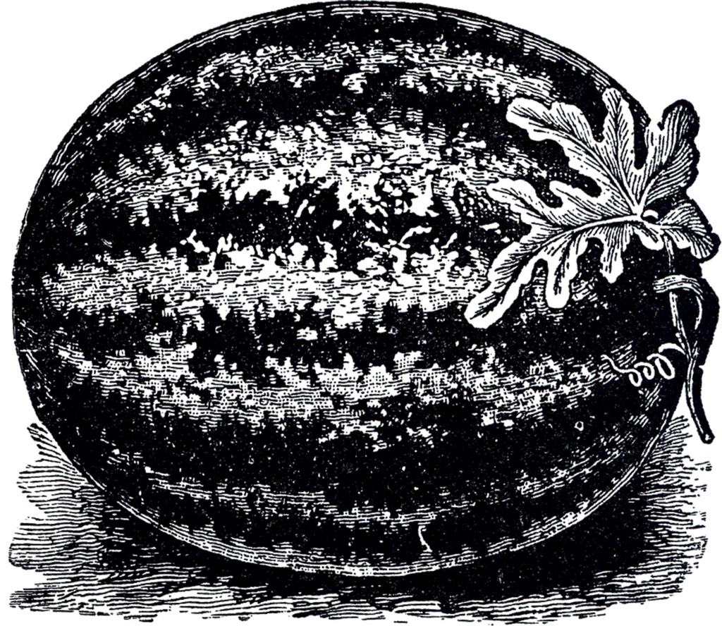 Free Public Domain Watermelon Image