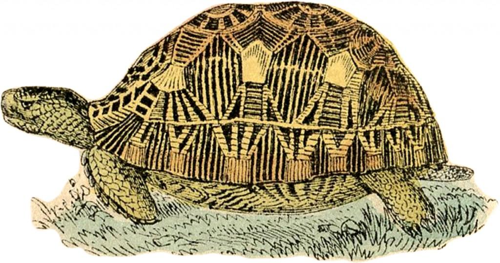 Free Stock Image Turtle