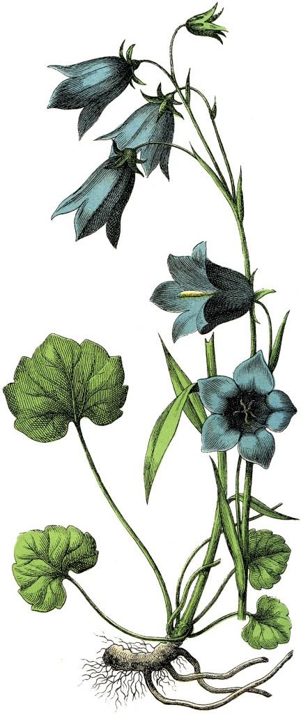 Vintage Blue Flowers Image