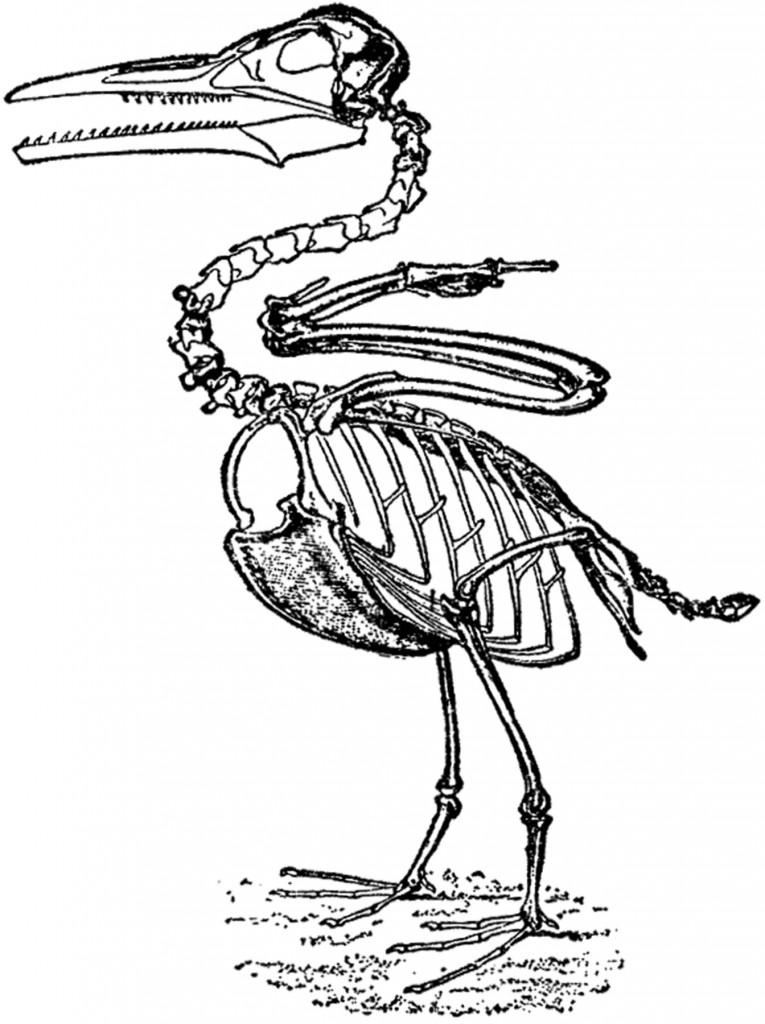 Vintage Dinosaur Bird Image