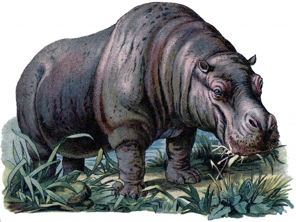Vintage Hippo Image