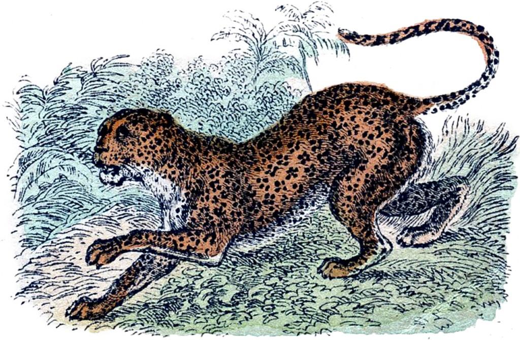 Vintage Jaguar Image