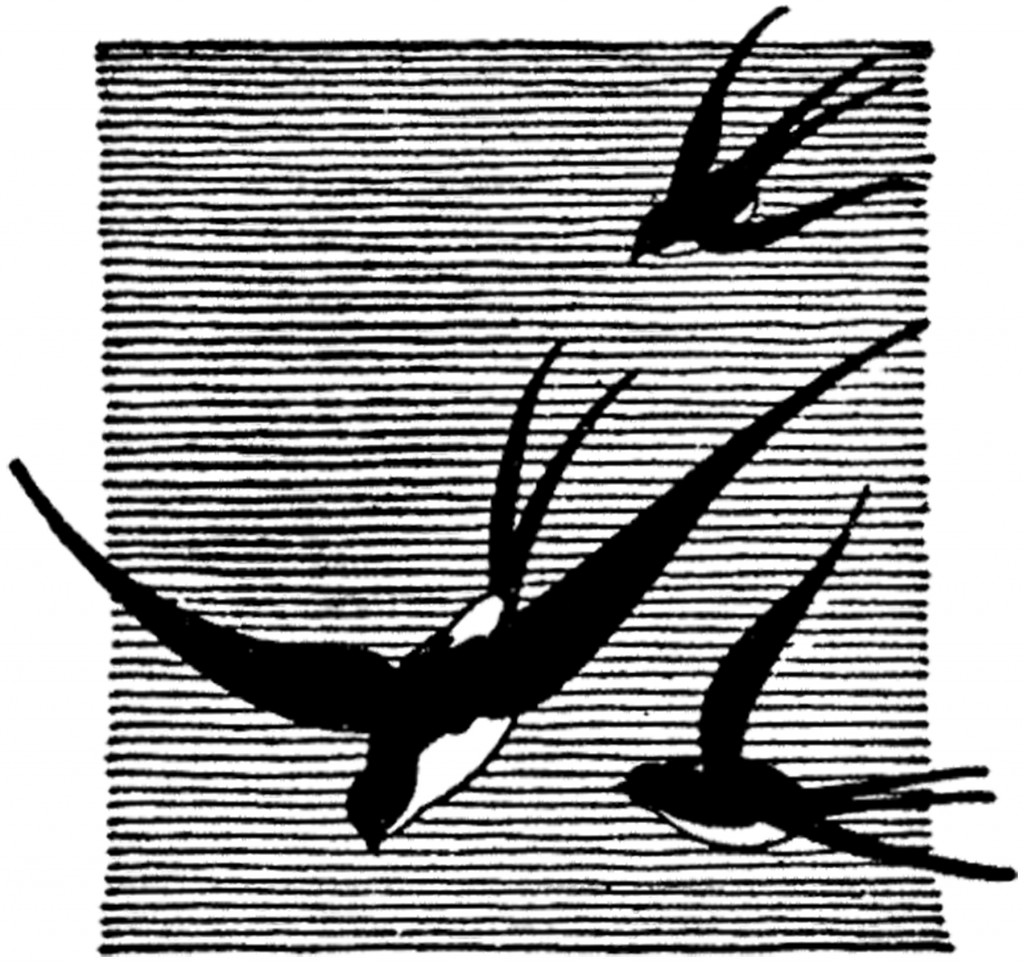 Vintage Swallow Drawing