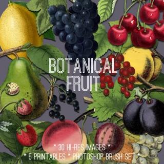 Beautiful Botanical Fruit Kit! TGF Premium