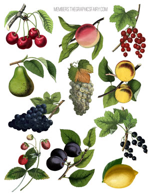 fruit_collage_sheet2_graphi