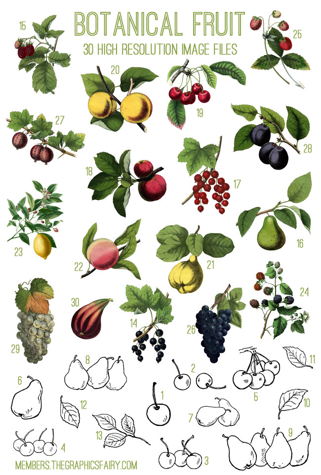 fruit_image_list_graphicsfairy