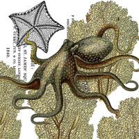 octopus_transfer_200x200_graphicsfairy