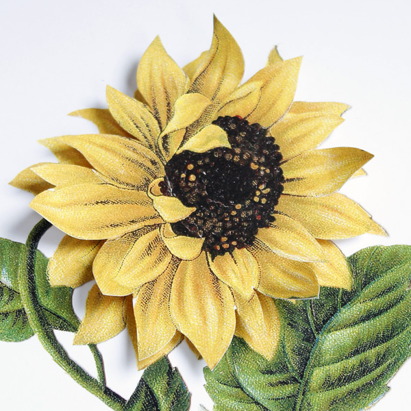 sunflower-5