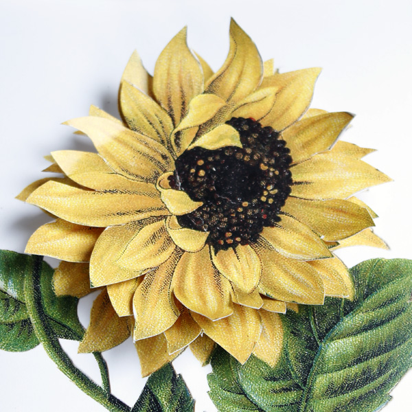 sunflower-6