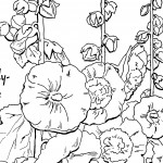 Adult Coloring Page Hollyhocks – Lovely!