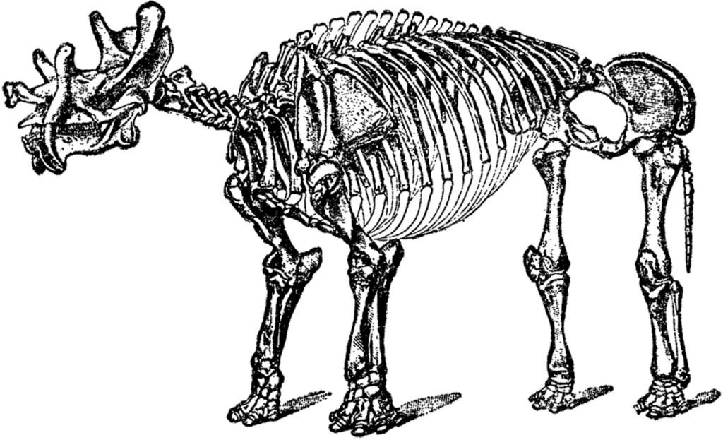 Antique Dinosaur Bones Picture