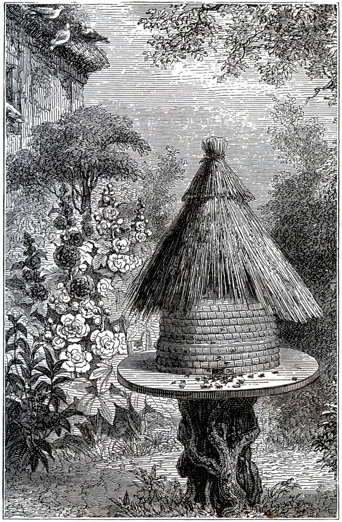 Early Beehive Image