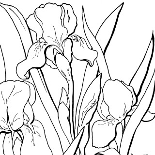 Free Adult Floral Coloring Page!