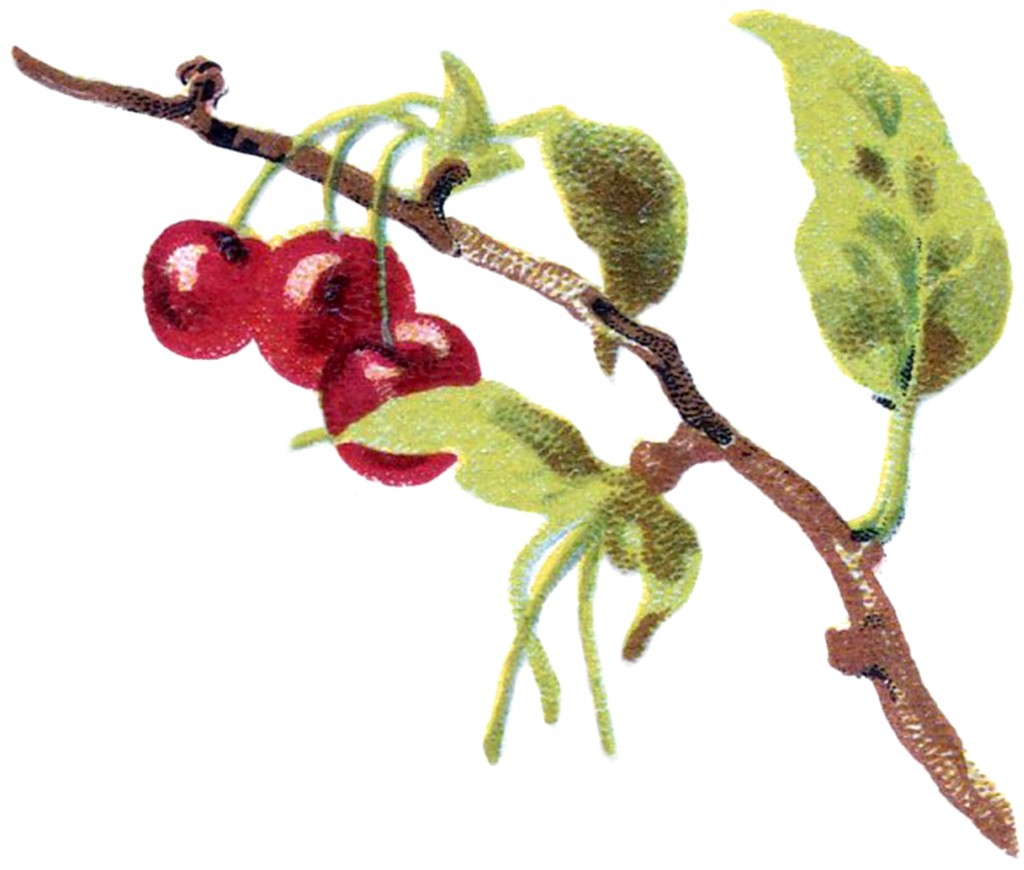 Vintage Cherry Branch Image