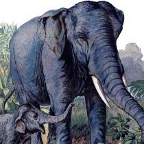 Vintage-Elephants-Image-thm-GraphicsFairy
