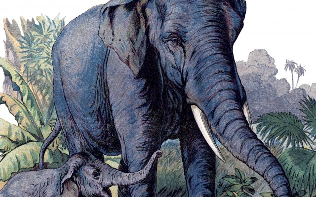 Vintage Elephants Image!