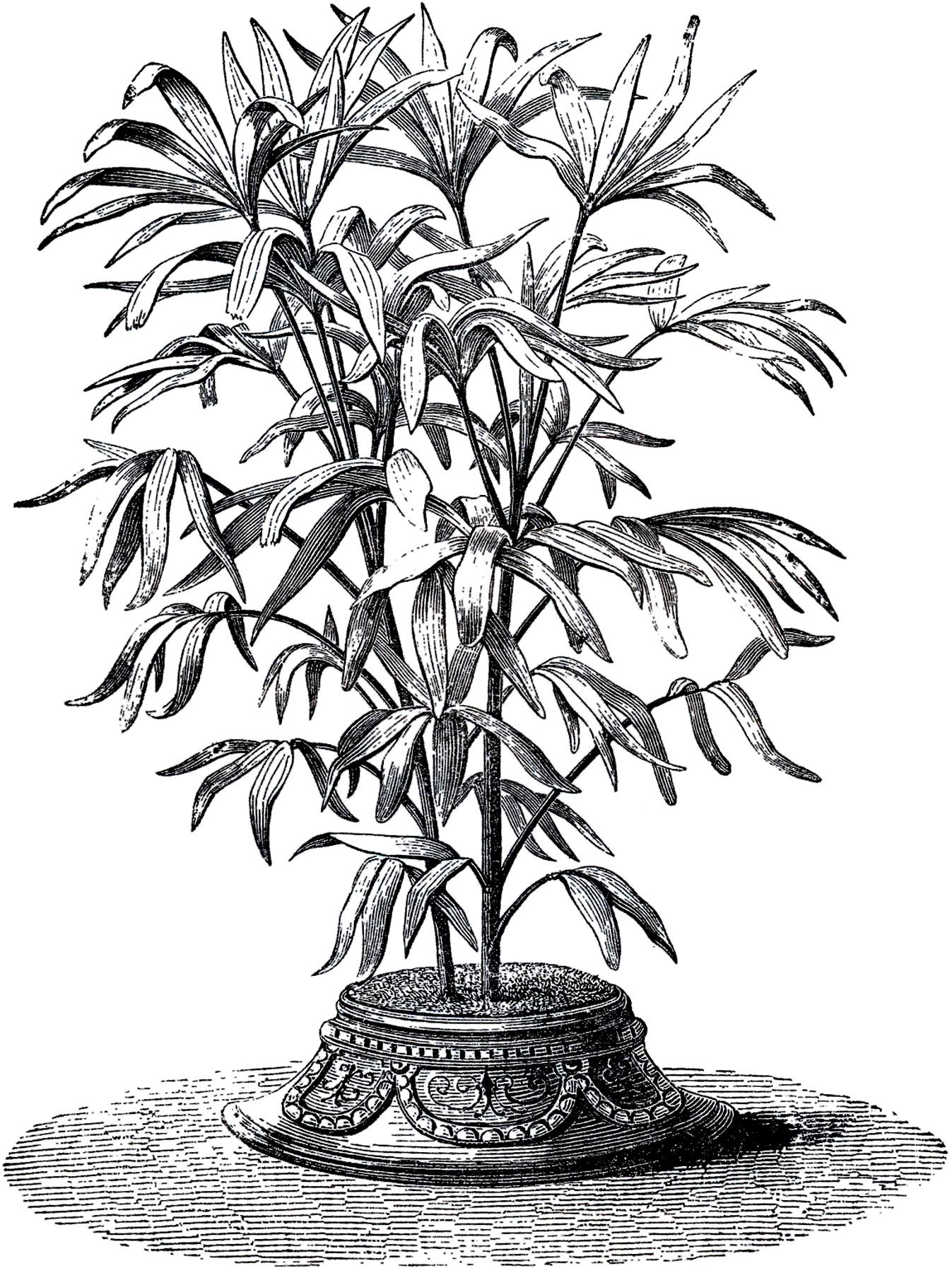 vintage house plant image