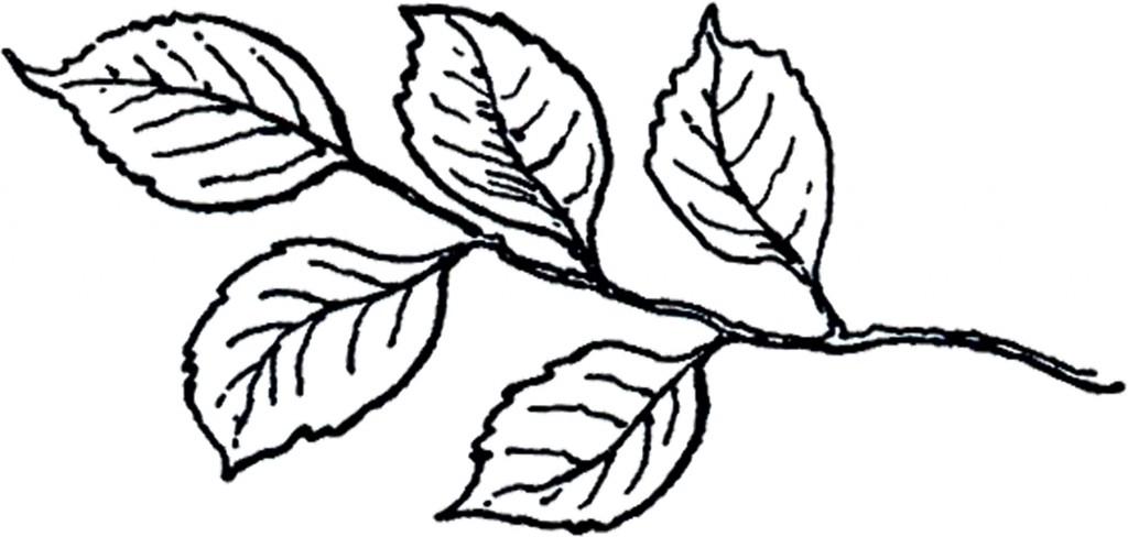 Vintage Line Art Leaves