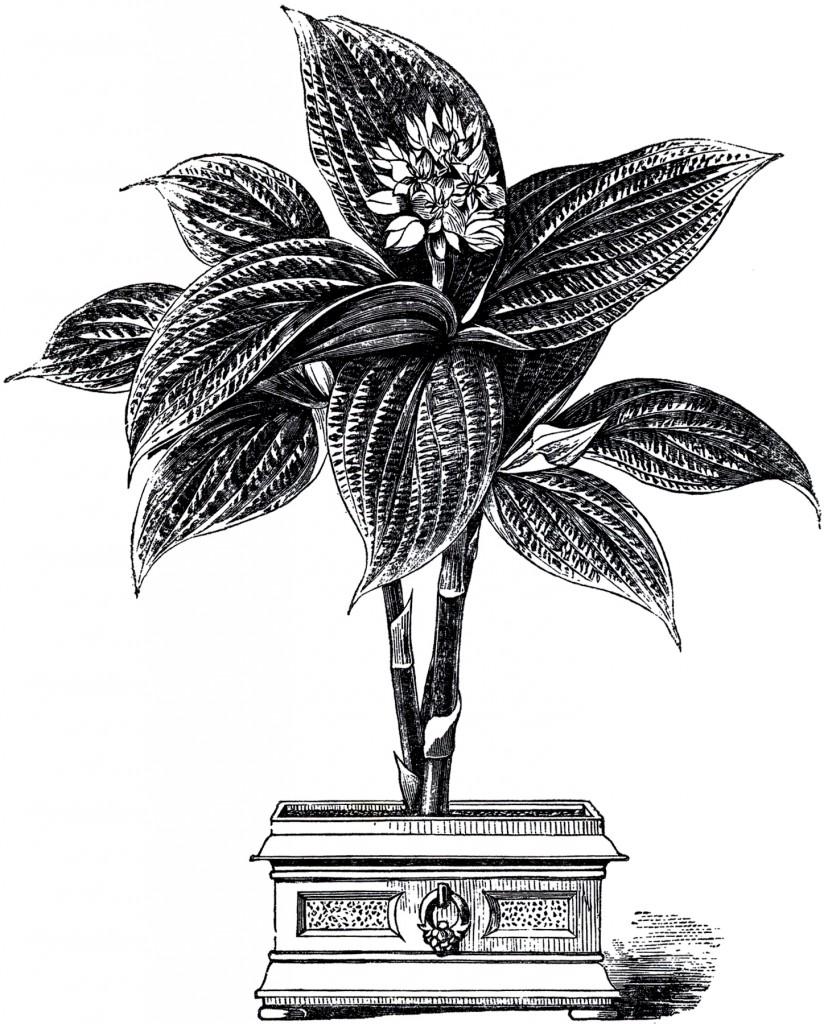 Vintage Plant in Urn Image
