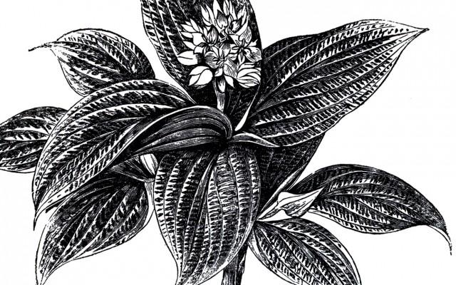 Vintage Plant in Urn Image!