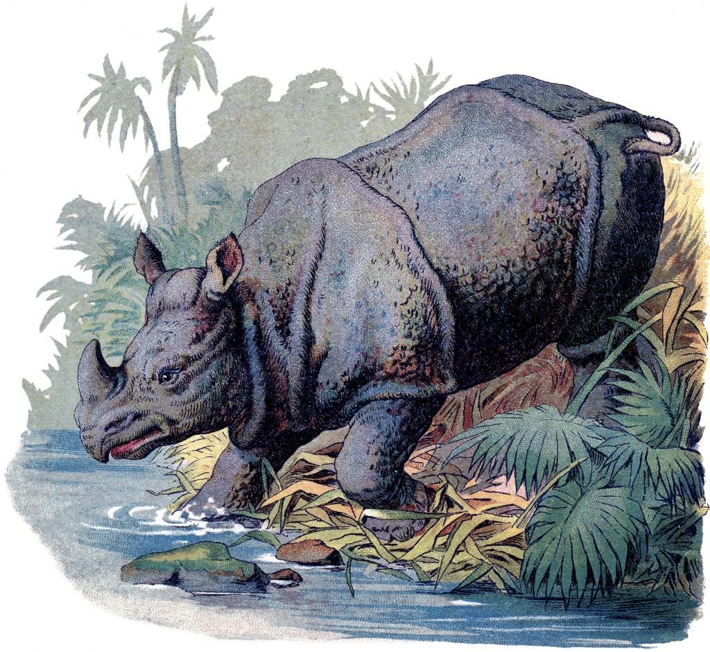 Vintage Rhino Image