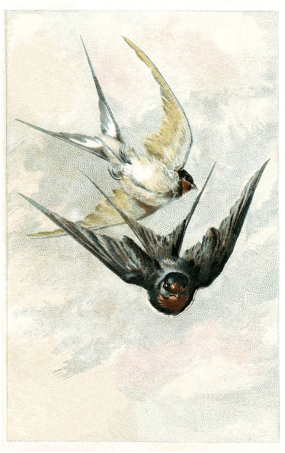 Antique Swallow 68