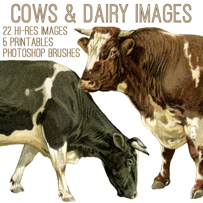 Cows and Dairy Kit