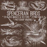 spencerian_650x650_graphicsfairy