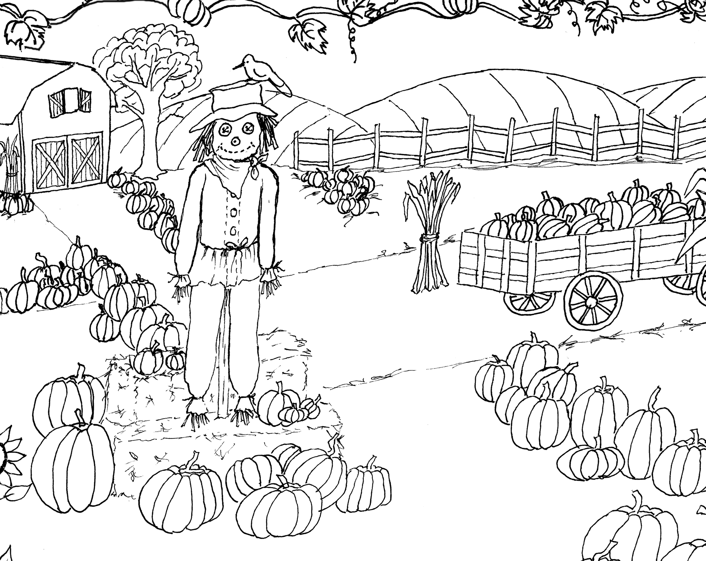 pumpkin patch coloring page printable the graphics fairy