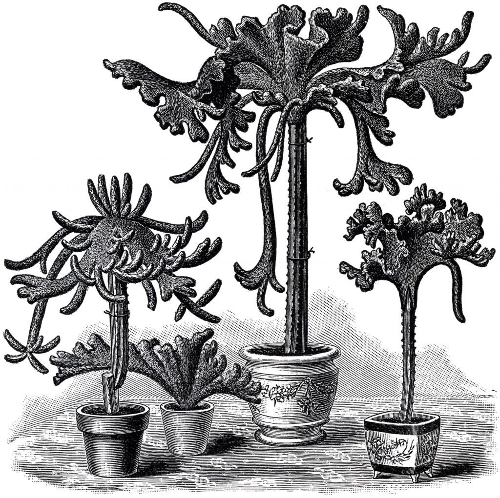 Free Vintage Cactus Image