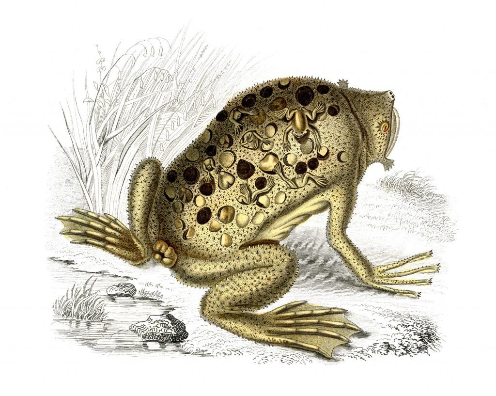 Natural History Frog Image