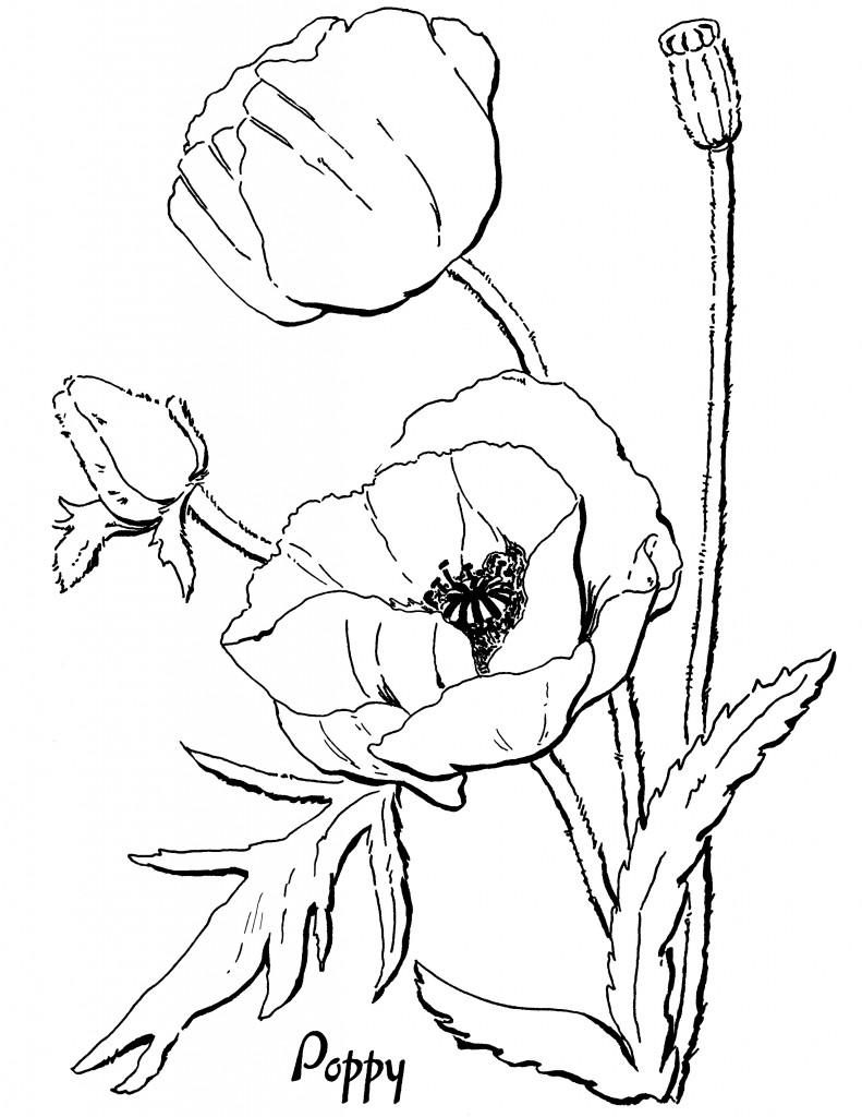 adults coloring pages printable graphic - photo#3