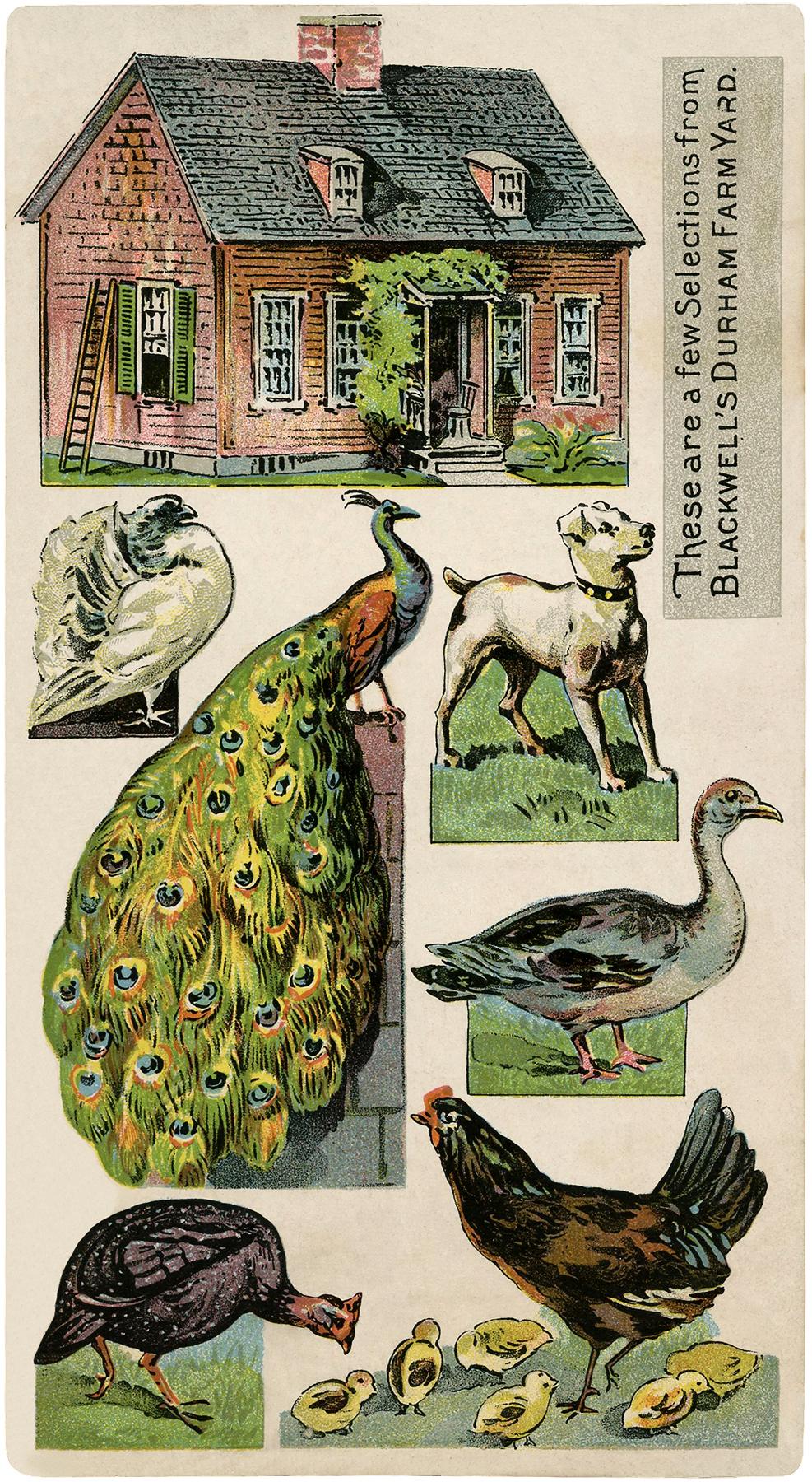 Cute Vintage Printable Farm Image The Graphics Fairy