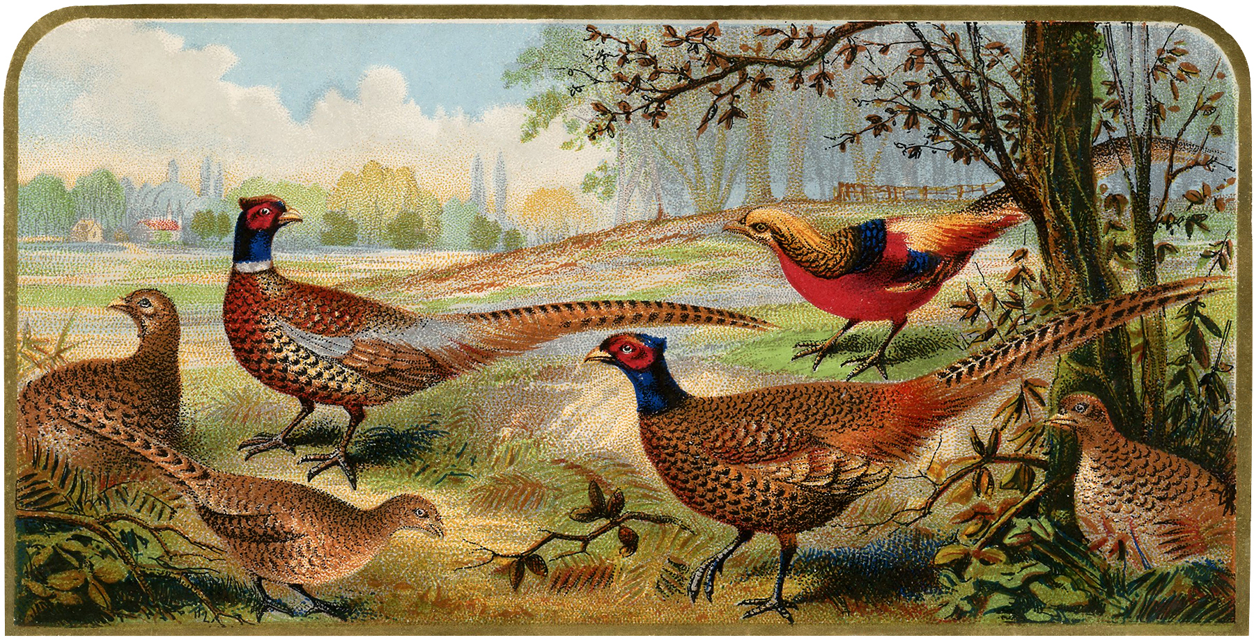 vintage pheasants image nice for fall projects  the Winter Flowers Clip Art Cornucopia Clip Art