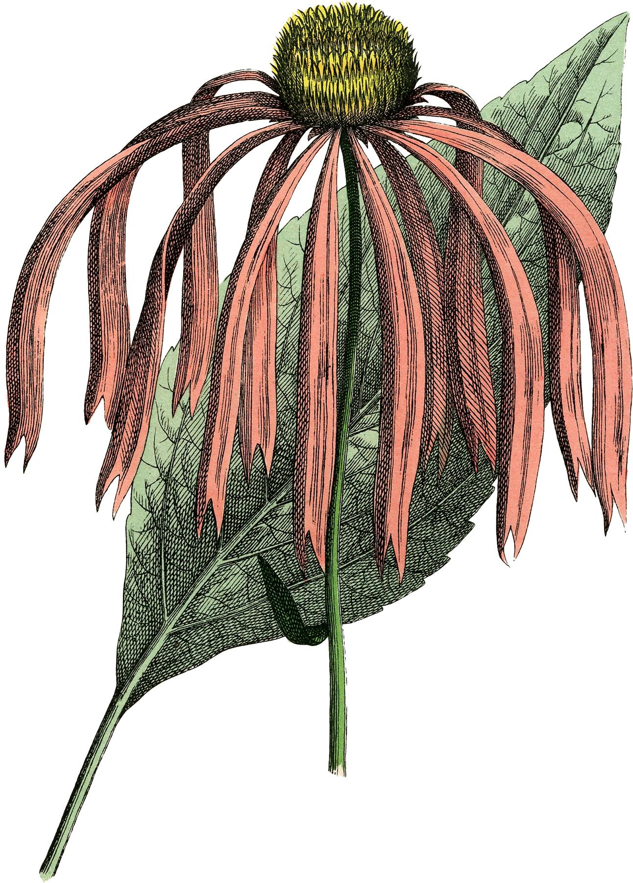 Vintage Pink Flower Image