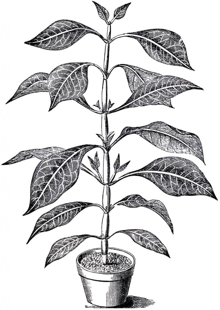 Vintage Potted Plant Image