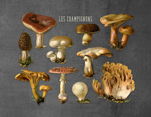 mushrooms_print_grey_graphicsfairy