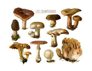 mushrooms_print_wht_graphicsfairy