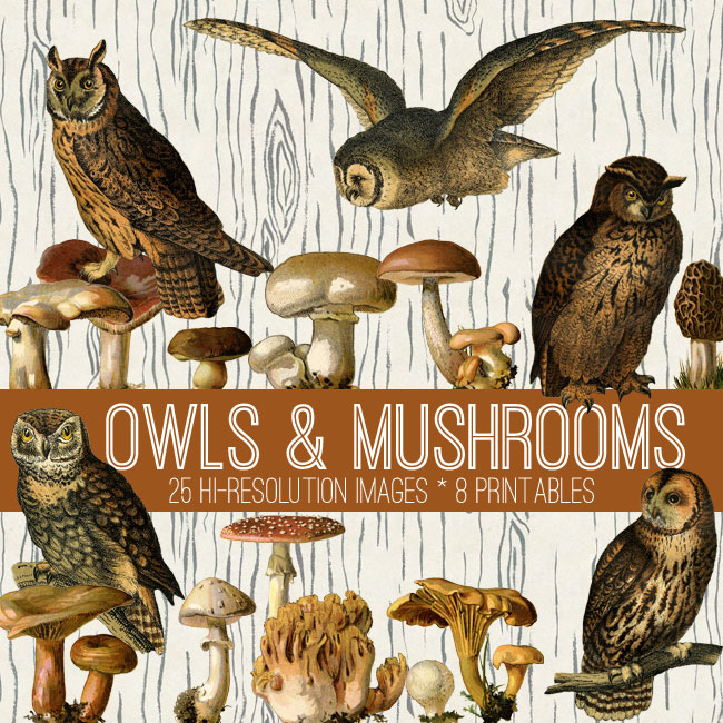 Vintage Owls and Mushrooms Kit