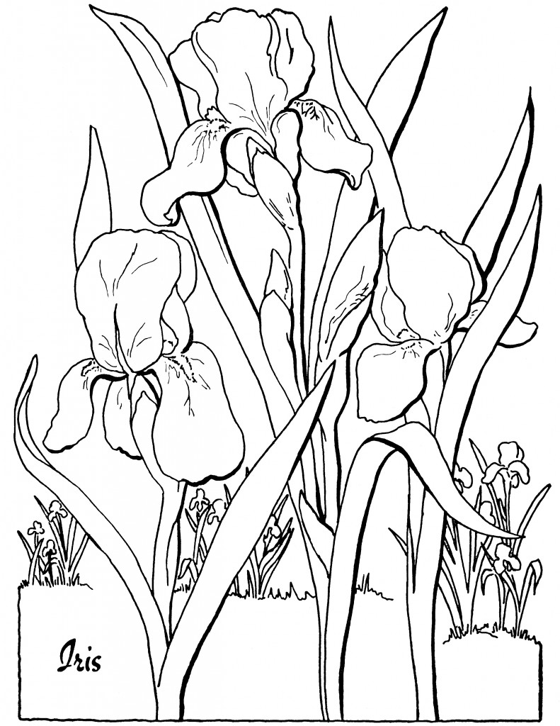 7 Floral Adult Coloring Pages - The Graphics Fairy