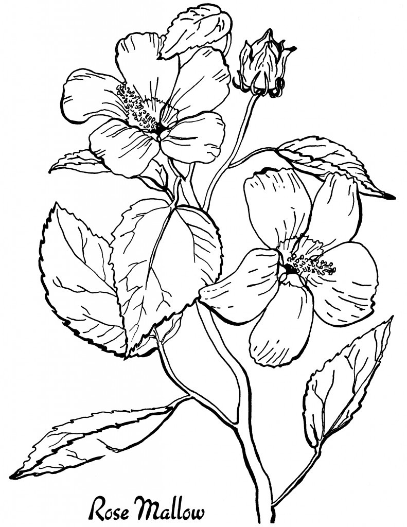 7 floral coloring pages the graphics fairy