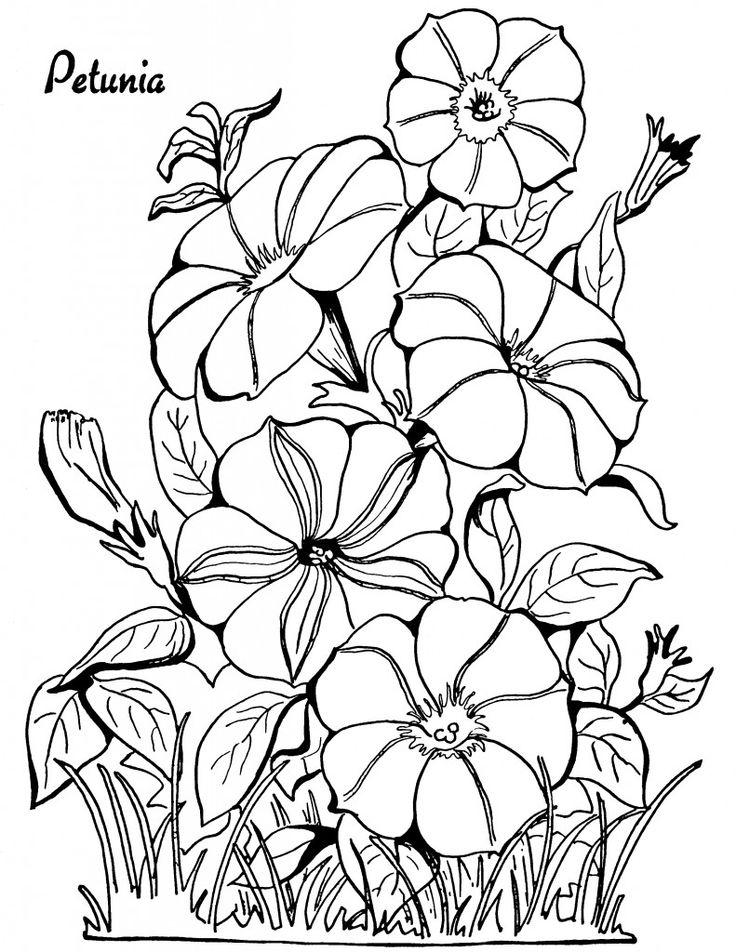 04 - Petunia Adult Coloring Pages