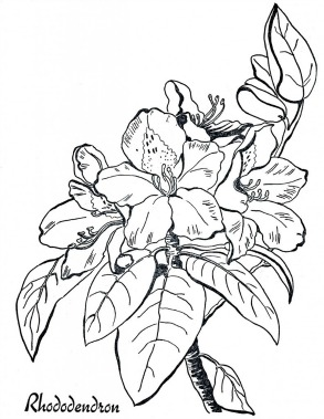 Rhododendron Adult Coloring Pages