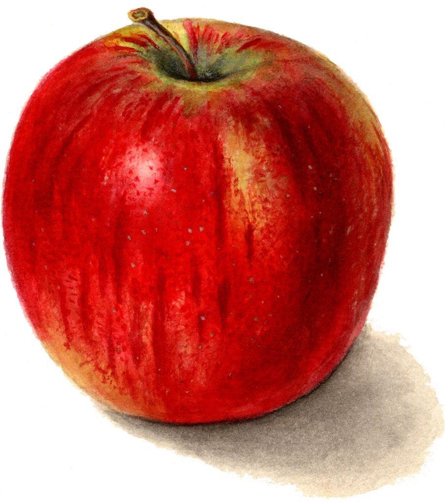 Apple Images Clip Art