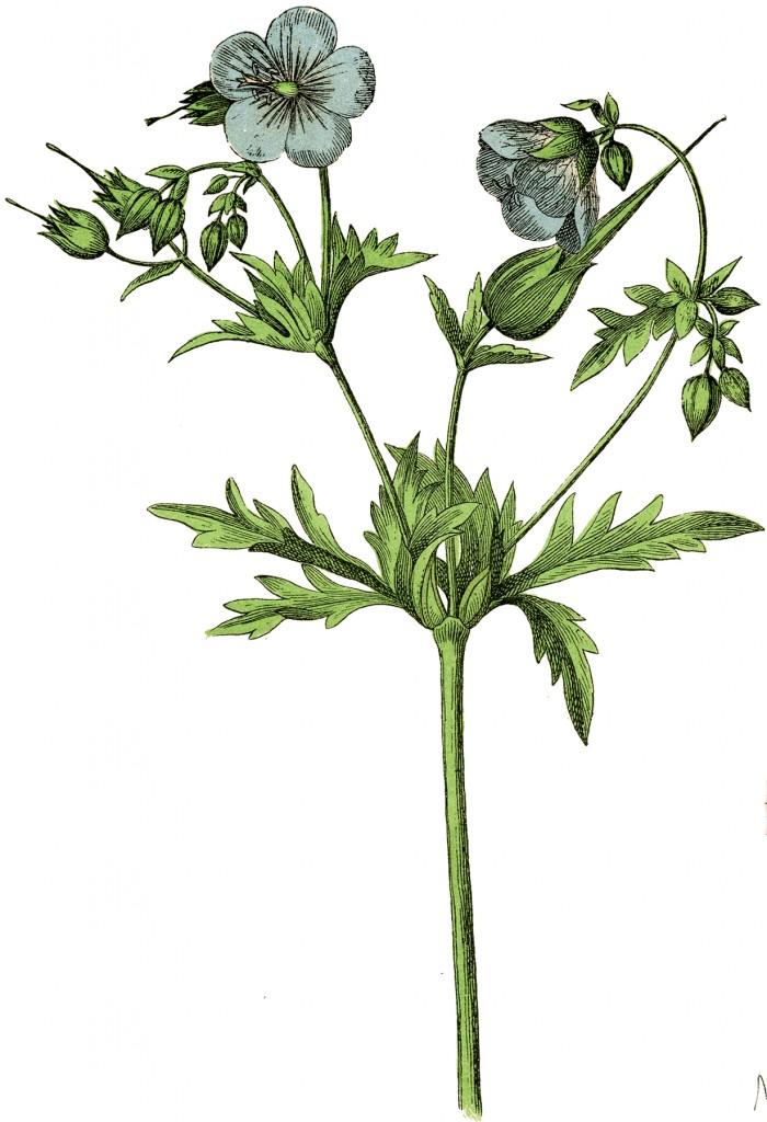Blue Botanical Flower Stock Image