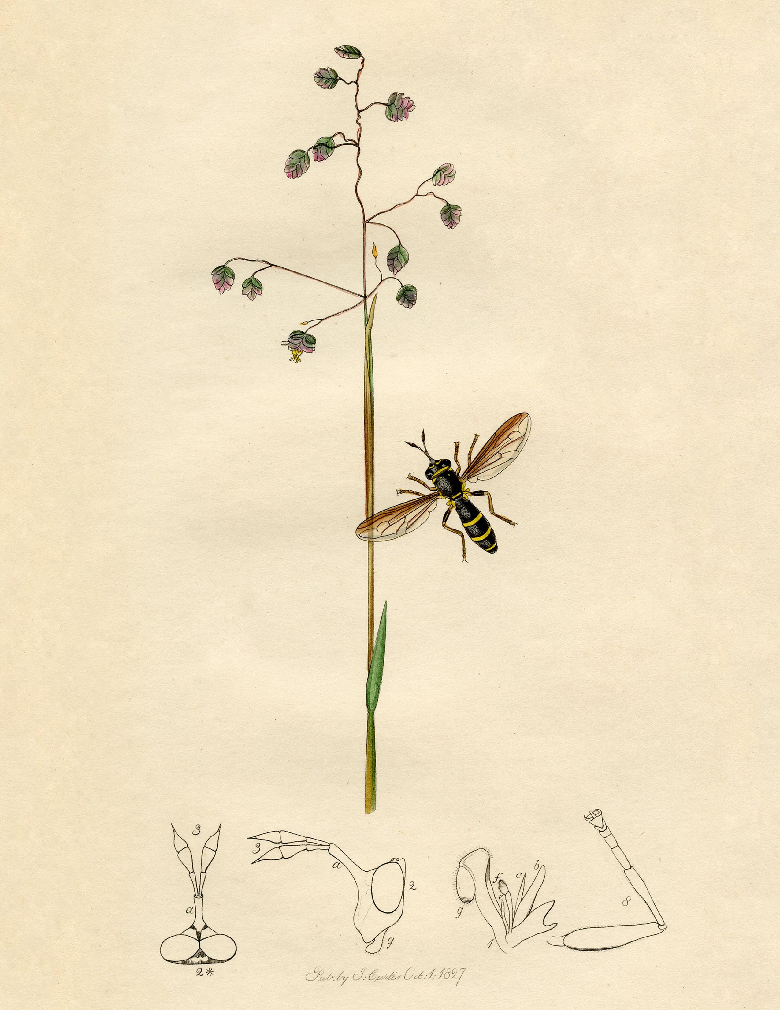 Natural History Insect Print