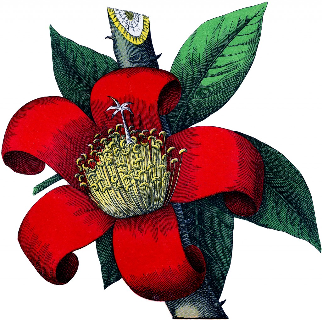 Red Botanical Flower Image