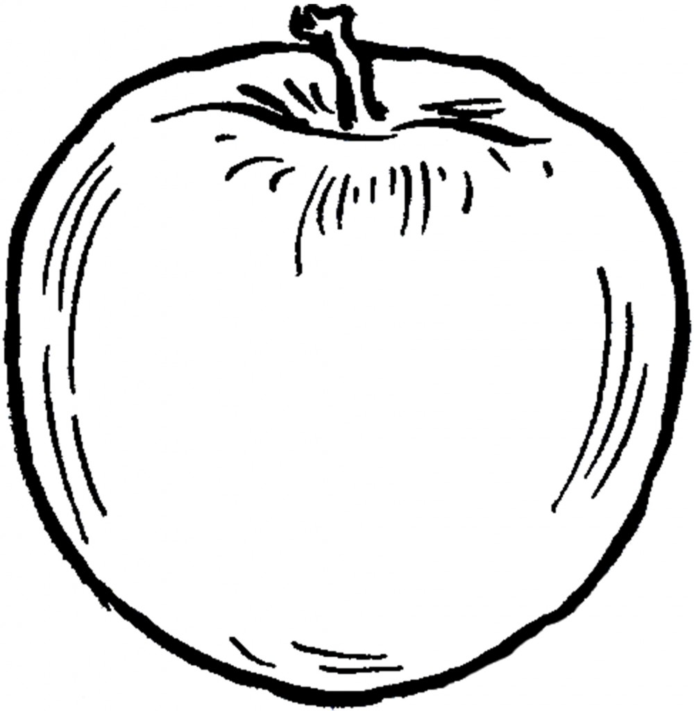 Vintage Apple Line Drawing Image