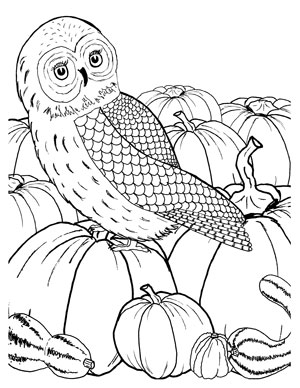 fall_owl_coloring_graphcisfairy